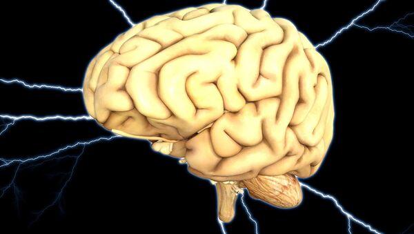 Human brain - Sputnik France