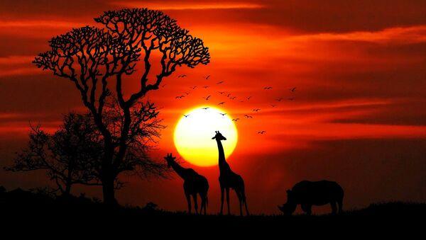 Africa - Sputnik France