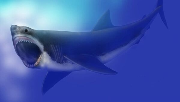 Depiction of Miocene great white shark (C. Megalodon) - Sputnik France