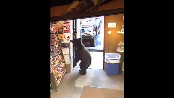 Un ours dans un magasin - Sputnik France