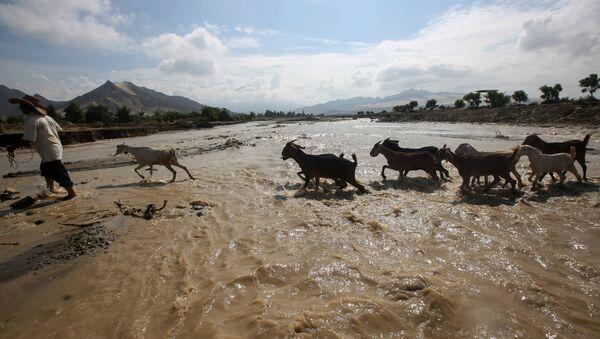 Goats cross the Viru river after a massive landslide and flood in Trujillo, northern Peru, March 22, 2017 - Sputnik France