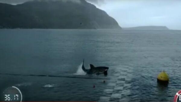 Phelps VS Shark Full Race - Sputnik France