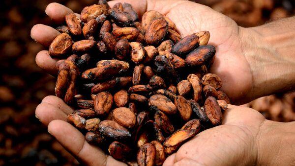 Cacao (imagen referencial) - Sputnik France