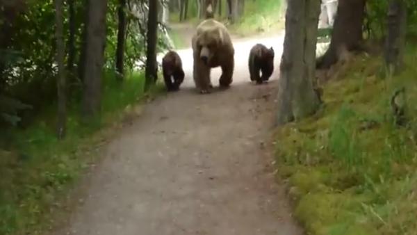 Je t'ai à l'œil: trois plantigrades suivent tranquillement un homme en Alaska - Sputnik France