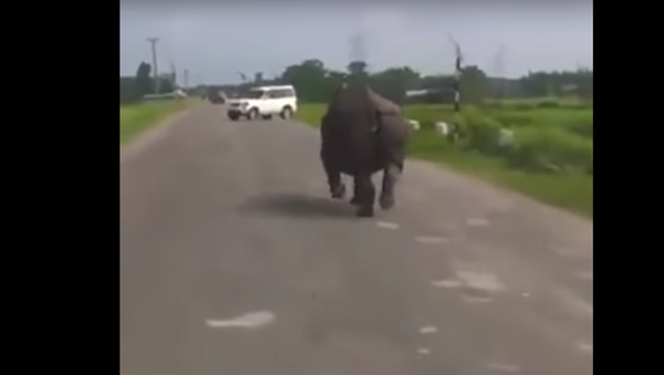 Rhino VS Car ! Funny Epic - Sputnik France