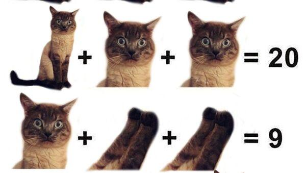Un problème de maths pour enfants qui a pour sujet les parties du corps d'un chat - Sputnik France