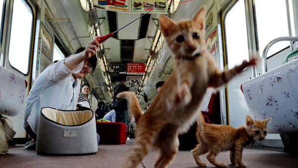 Un train à chats au Japon - Sputnik France