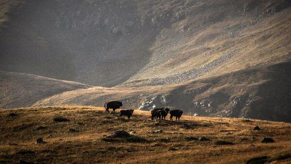 La réserve naturelle et biosphérique du Caucase - Sputnik France