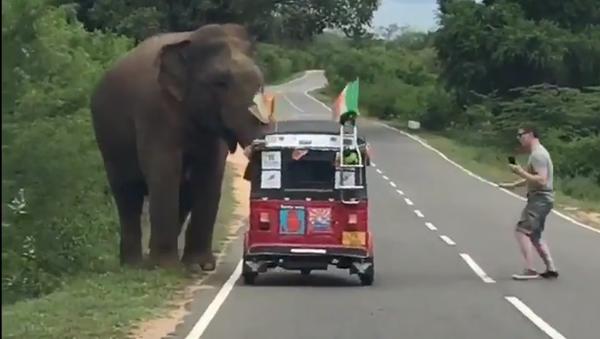 Cet Irlandais regrette d'avoir nourri un éléphant à la main... - Sputnik France
