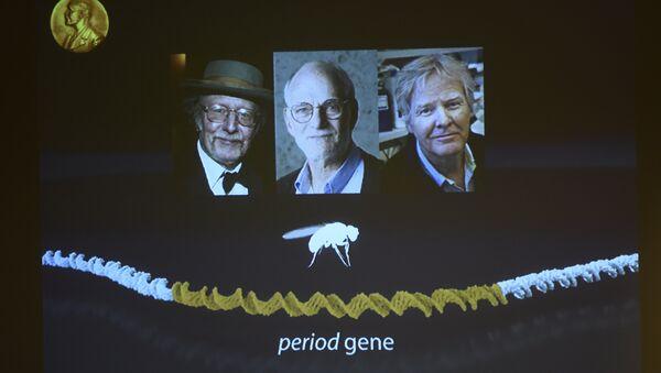le professeur Jeffrey Hall de New York, Michael Rosbash de Kansas City et Michael Young de Miami - Sputnik France