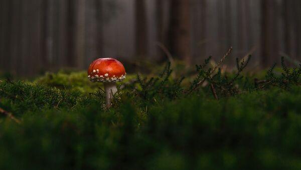 un champignon - Sputnik France