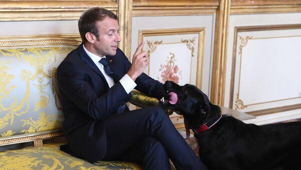 Emmanuel Macron et son chien Nemo - Sputnik France