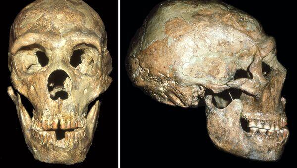 Череп глухого неандертальца, найденный в пещере Шанидар на севере Ирака - Sputnik France