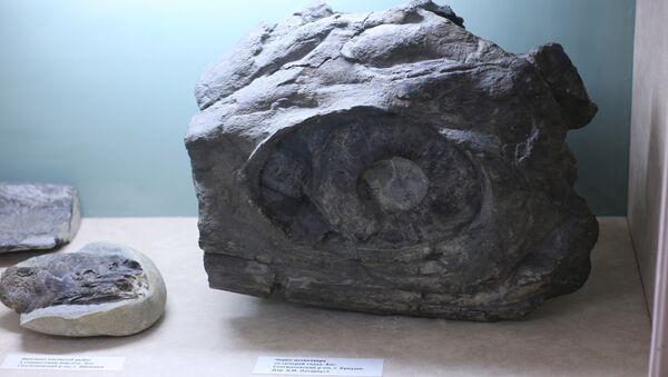 Fragment des restes d'un ichtyosaure - Sputnik France