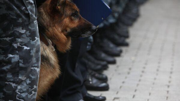 Les chiens des douanes de Moscou - Sputnik France
