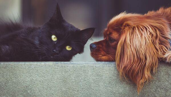 Un gato y un perro - Sputnik France