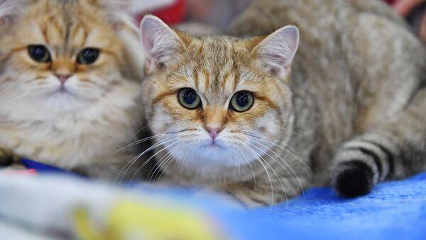 Deux chats - Sputnik France