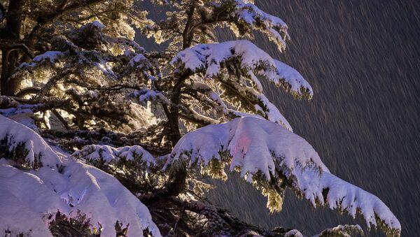 le neige (image d'illustration) - Sputnik France