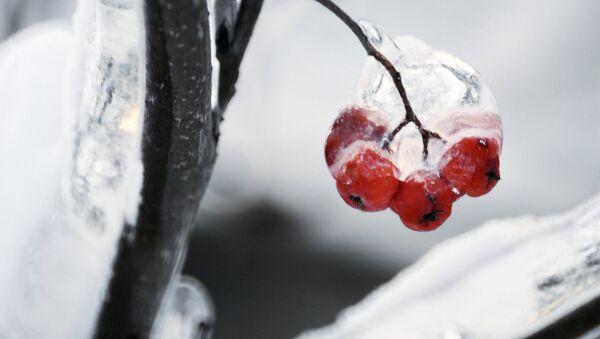 Зима в Москве - Sputnik France