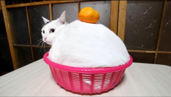 みみ鏡餅 Kagamimochi  170103 - Sputnik France