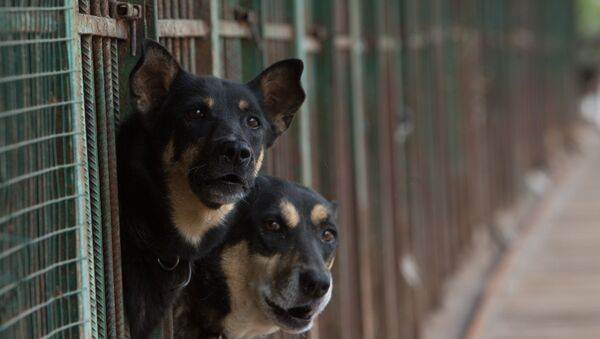 Dogs in an animal shelter, Moscow - Sputnik France