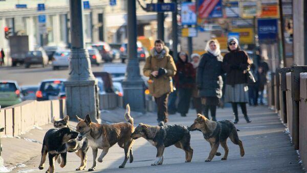 Chiens errants à Moscou - Sputnik France