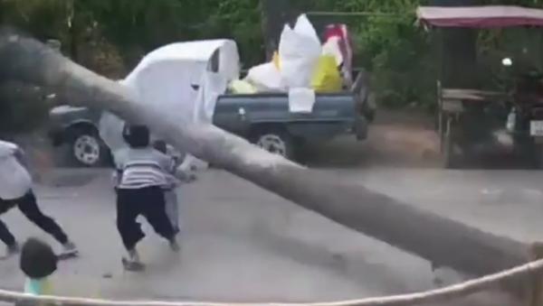 Un énorme palmier s'est effondré à quelques centimètres d'un enfant - Sputnik France
