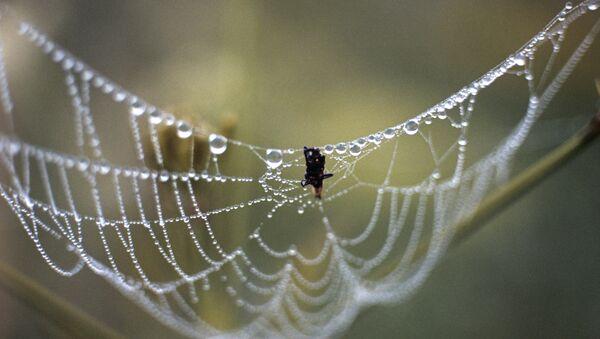 Une toile d'araignée - Sputnik France