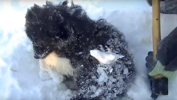 Des habitants de Yamal ont sauvé un chiot gelé - Sputnik France