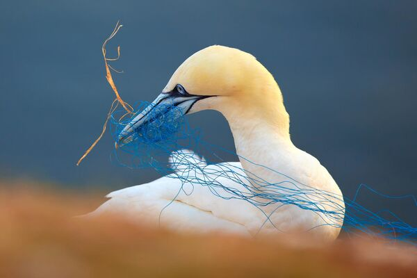 Les plus belles photos d'oiseaux - Sputnik France