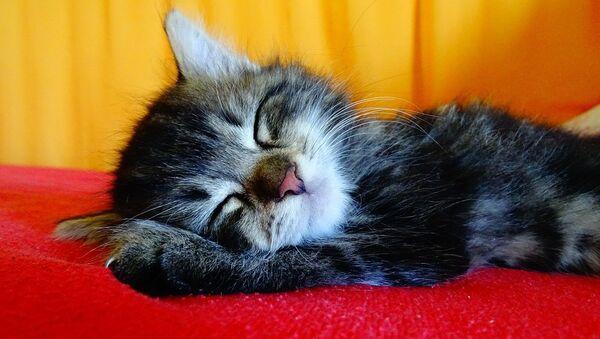 Le sommeil est indspensable à tout le monde - Sputnik France