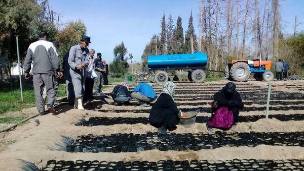 L'agriculture se relève dans la province de Deir ez-Zor - Sputnik France