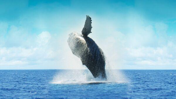 Whale - Sputnik France