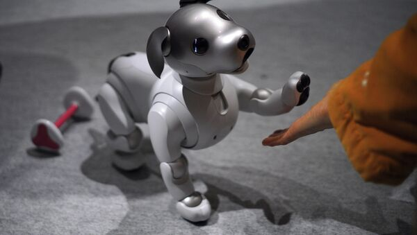 A guest plays with Sony Corp.'s new Aibo robot dog at its showroom in Tokyo (File) - Sputnik France