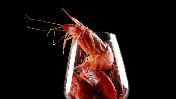 crevette, image d'illustration - Sputnik France