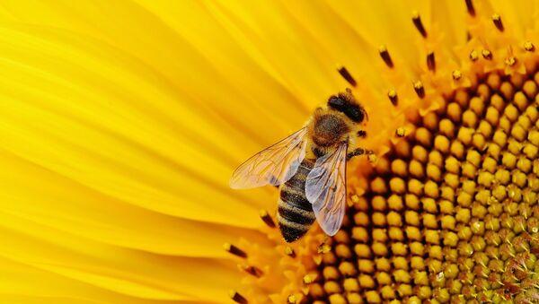 Une abeille - Sputnik France