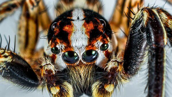 Spider - Sputnik France