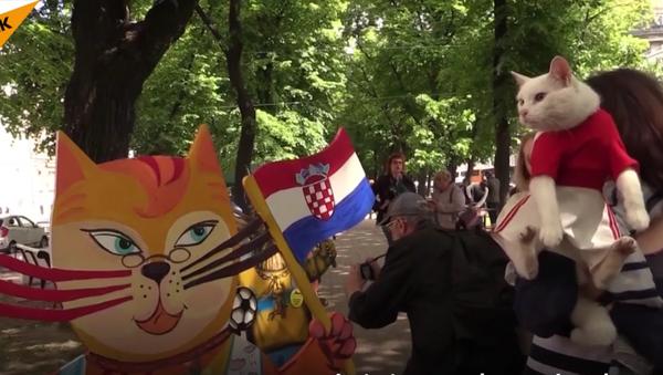 un chat oracle - Sputnik France