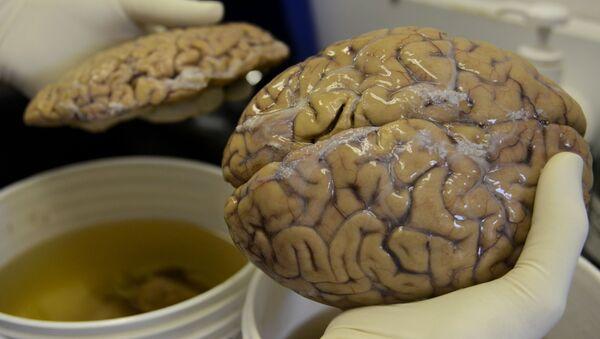 Cerveau humain - Sputnik France