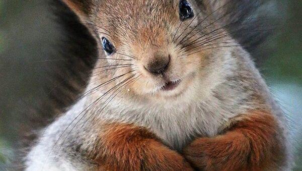 Les écureuils de Moscou - Sputnik France