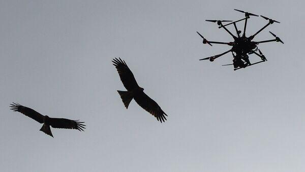 Drone et oiseaux - Sputnik France