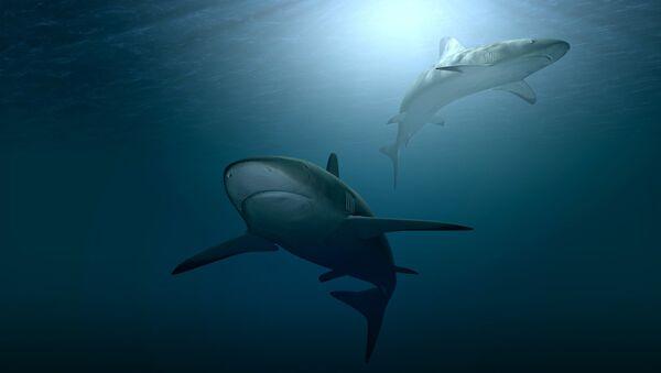 Requins - Sputnik France