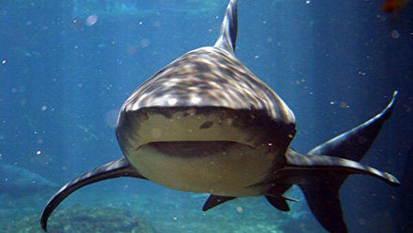 Un requin - Sputnik France