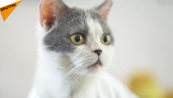 chat chinois - Sputnik France
