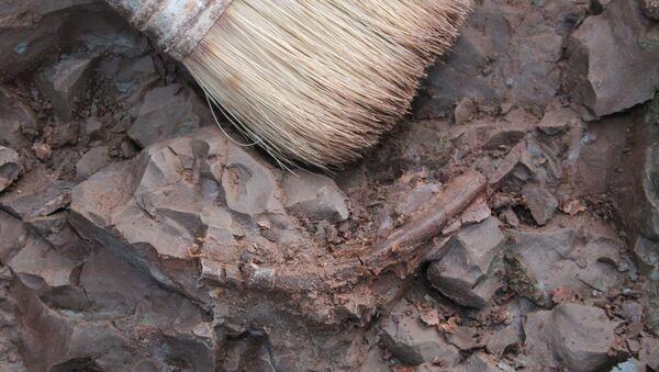 Un charnier contenant les restes de 600 personnes découvert à Brest - Sputnik France