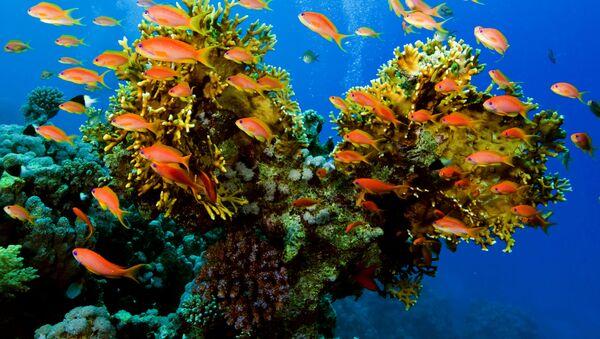 Biodiversité marine - Sputnik France