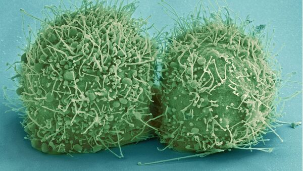 des cellules des bactéries (images d'illustration) - Sputnik France