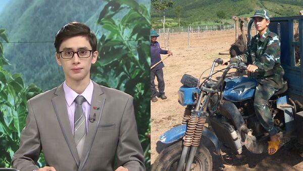 Au Vietnam, un célèbre animateur de télé troque le micro contre des autruches - Sputnik France