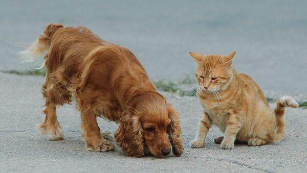 Chat et chien - Sputnik France