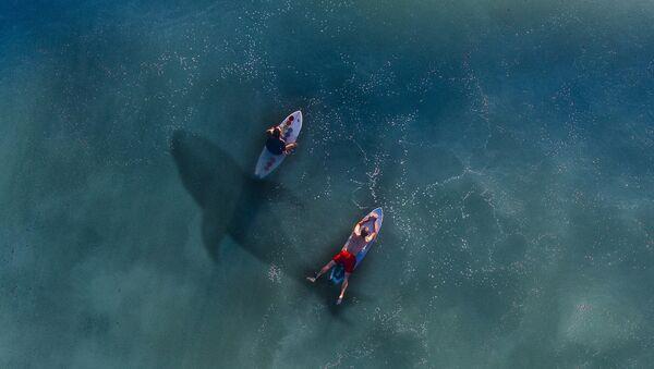 Surfers et un requin - Sputnik France